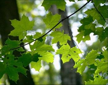 Зеленый цвет надежды и удачи